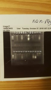 Gel pic of DNA extracted using DNeasy kit.